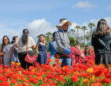 Labor and Leisure in the Flower Fields