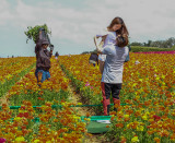 Work and Play in the Flower Fields