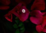 The Little White Flower