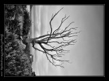 tree01_1218.jpg