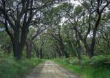 Manna gum coastal forest near Hordern Vale Vic