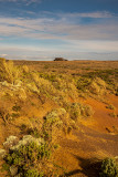 Coastal heath near Port Campbell Vic