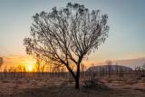 DSC_7170  Uluru