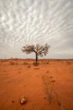 DSC_7226  Lone tree
