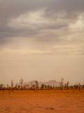 DSC_7236  Kata Tjuta through sandstorm