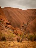 DSC_7256 Uluru