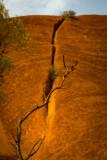 DSC_7468  Uluru