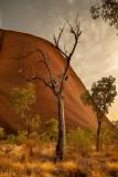 DSC_7470  Uluru
