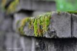 Moss by Paul L. Gardner