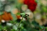 Nurturing Geranium