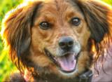 HAPPY DOG, SOLEMN POSSUM