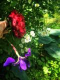 My Yard in Bloom