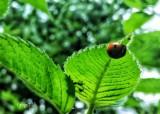 Lady Bug Season