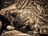 A Cat's Cuddle