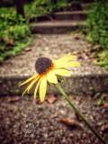 Remnants of Summer