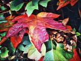 Perky Autumn Leaf