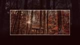 Autumn 2020 Photo-A-Day