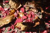 Walking through Leaves