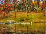 Pond with WaterFowl