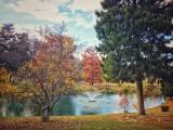 Autumn around a Lake