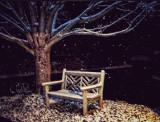Snowy Solitude.