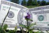 $20 ajuga DSC00940 (Flowers).jpg