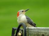 Birds on Feeder