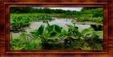 2021-06-20 Brick Pond