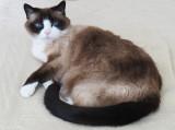 RIP Lilicat Today Lilicat died.