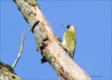 birds_netherlands