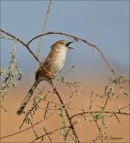 Birds oman