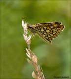 Butterflies - Vlinders