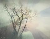 Dream_tree