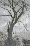 Radiant_tree