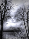 Dreaming_Trees
