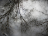 Dreamy_reflections