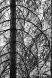 Forest_patterns.jpg