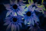 Glow_n_Dark_Daisies