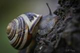 Tree_Snail2