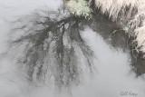 Creek_Reflection