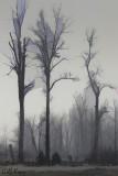 More_fog