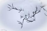 Snow_on_Snow.