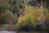 Autumn_Glory