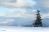Snow_Fields