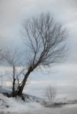 Winter_tree6