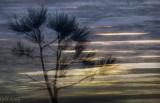 Abstrct Pine4