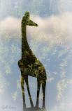 Jewelled Giraffe