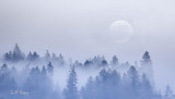 Morning Fog  and moon