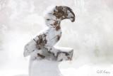 Snowy Hornbill