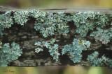 Fence Fungi